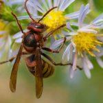 Arılar